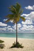 Palm tree on Freeport beach, Grand Bahama Island