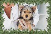 Composite image of vet holding cute puppy against green fir branches