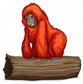 Illustration of an orangutan on a long