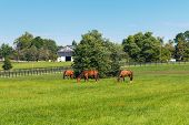 pic of farm landscape  - Horses at horse farm - JPG