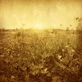 Field of buttercup flowers at sunset. Grunge and retro style.