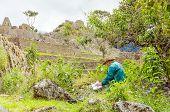 Machu Picchu, Peru - senior tourist reading in ruins