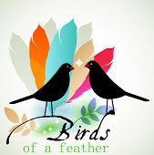 Black birds and feathers