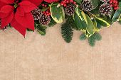Christmas and winter flora background border with red poinsettia flower, holly, mistletoe and spruce fir over brown paper.