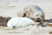 Mother and baby seal on the beach