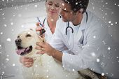Composite image of veterinarians examining ear of dog against snow falling