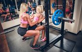 stock photo of squatting  - Young sexy women in the gym doing squat with barbell - JPG