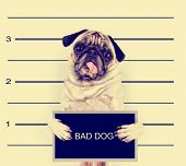 a mugshot of a bad dog toned with a retro vintage instagram filter effect