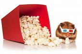 Hamster in 3d glasses chewing popcorn next to the red bucket, isolated on the white background.
