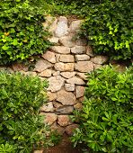 image of ivy vine  - Ivy and the ancient stone wall - JPG