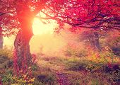 pic of tree leaves  - Majestic autumn trees in forest glowing by sunlight - JPG
