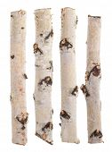 Birch logs isolated on white