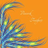 Vector feathers peacock. Orange background. Fashionable design e