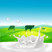pic of calf cow  - vector design with cow milk splash and landscape - JPG