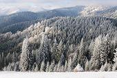 Winter sun landscape in a mountain forest