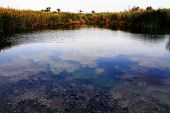 picture of oasis  - Einot Zokim or Ein Feshka a blooming desert oasis on the shore of the Dead Sea Israel - JPG