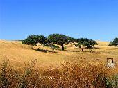 Windy Oaks