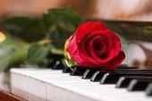 Red Beautiful Rose On Piano Keyboard.
