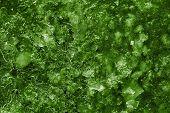 Abstract Pattern Of Dark Green Ice
