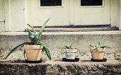 Three Various Succulent Plants In Flower Pots