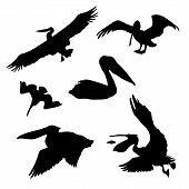 stock photo of animal silhouette  - Pelican set of black silhouettes - JPG
