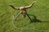 picture of lasso  - A dummy head and horns of a steer with horns is the focal point of a cowboy