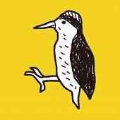 foto of pecker  - Woodpecker Doodle - JPG