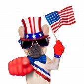 stock photo of uncle  - french bulldog waving a flag of usa on independence day on 4th of july while pointing at you with finger isolated on white background - JPG