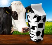 picture of white-milk  - White packaging of fresh milk with text Milk and black spots in a countryside landscape with green grass and a close up of a black and white curious cow - JPG