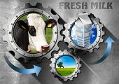 picture of milk  - Three metallic gears with head of cow green pasture and white packaging carton of milk - JPG