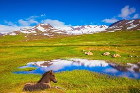 picture of iceland farm  - Summer Iceland - JPG