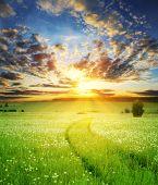 Campo com pista de grama e carro profunda sobre pôr do sol