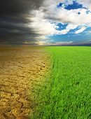 stock photo of dead plant  - Green grass and dry desert land - JPG