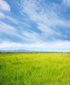 Green meadow and blue sky with clouds