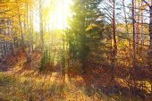 Gully in autumn forest with sunlight