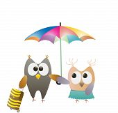 owls and umbrella