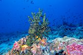 Постер, плакат: Maldives Corals And Fish Underwater Panorama