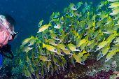 Постер, плакат: School Of Fish While Scuba Diving In Maldives