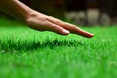 stock photo of grass area  - Hand over green lush grass - JPG