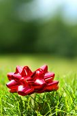 Red Christmas bow with golf tee in the grass