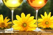 Golden wine in the sun on rustic table
