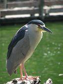 Bird Balancing Nearby Lake