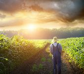 Farmer walking in corn fields with beautiful sunset