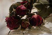Dead Rose