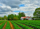 A Beautiful Country Home With A Red Roof On A Farm With Rows Of Green Tilled Crops And A Dramatic Cl poster
