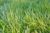 Green Grass. Natural Grass. Green Grass. poster