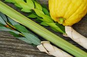 pic of sukkot  - The Four Species - JPG
