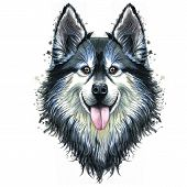 Watercolor Print Of A Dog Portrait Of A Hussy Or Husky Breed, A Mammal Animal On A White Background  poster