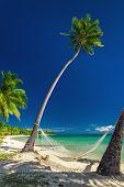 Empty hammock under tall palm trees, tropical beach, Fiji island poster