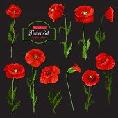 Poppy Flower Icon Set Of Red Wildflower. Blooming Poppy Flower With Green Leaf, Stem And Floral Bud, poster